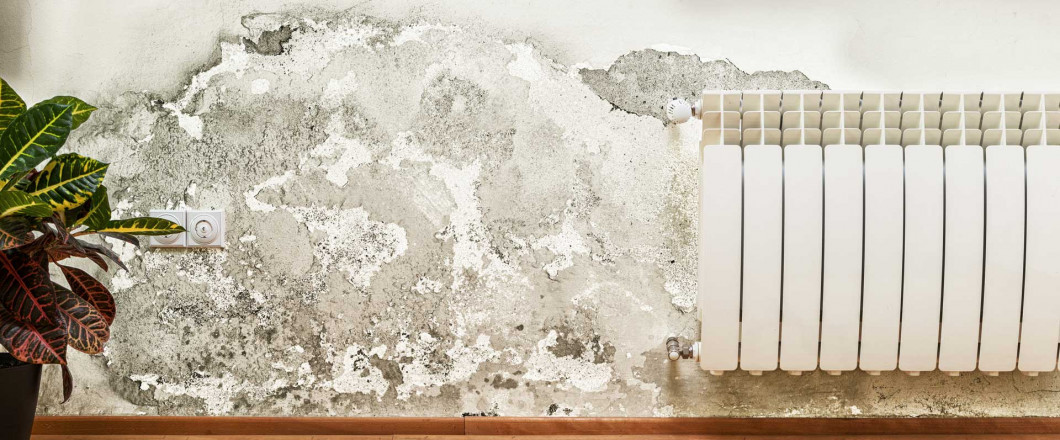 Keep your Family Safe from The Dangers of Mold